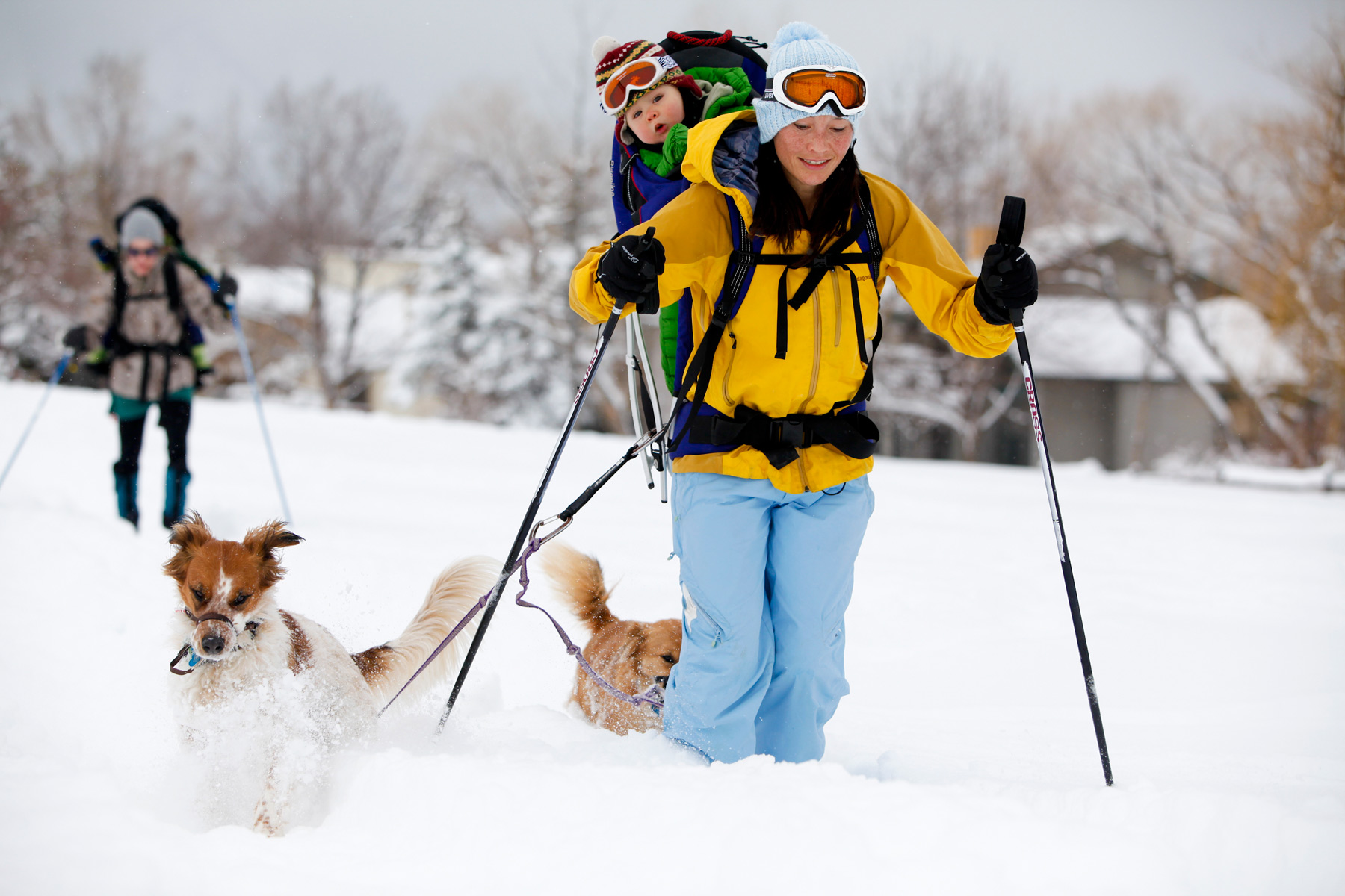 XCountry_skiing_dog_Kids.jpg